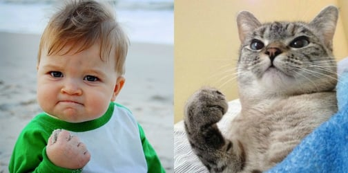 These funny pets will remind you of your kids