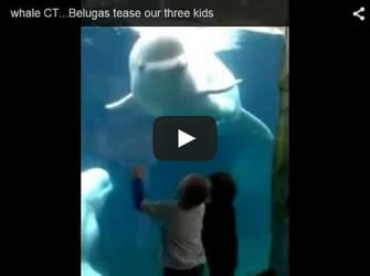 Playful beluga whale scares kids - Watch this funny video!