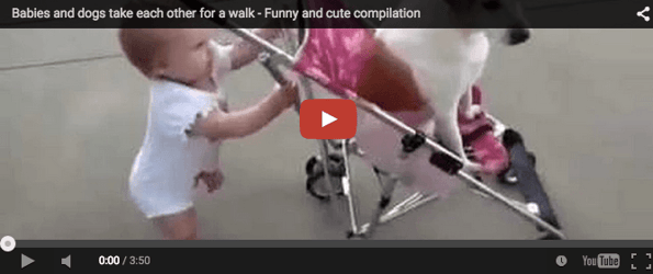 When babies and dogs take each other for a walk... Must watch!