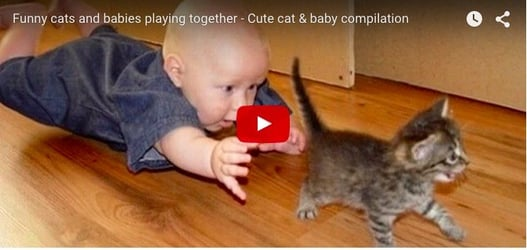 The truth about cats and babies: Funny video