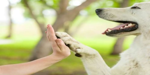 Pets and the benefits of having them