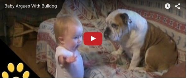 Little one argues with a bulldog and how: Cute baby video