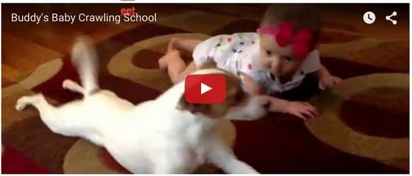 Watching this helpful dog teach baby to crawl will make you go awww...