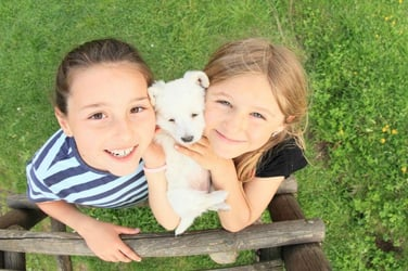 Kids who have puppies are less prone to asthama