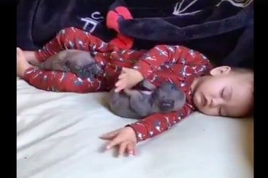 This baby and puppy nap session will melt your heart