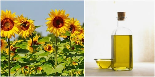 Mums beware! Cooking food in vegetable oil can lead to cancer, says study