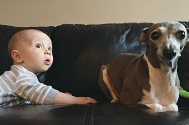 Baby 'rescues' this adopted dog from a life of fear! Heart melting, this!
