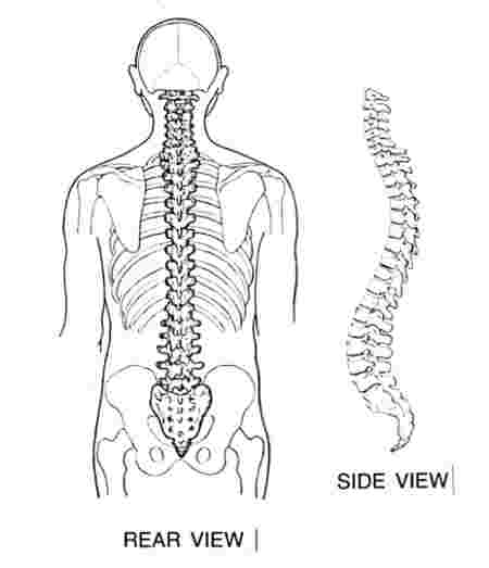 Pregnancy back pain is caused by a change in body alignment