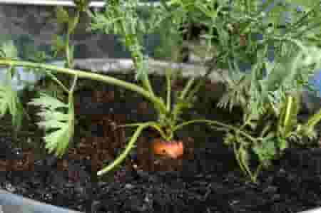 Growing your own vegetables indoors