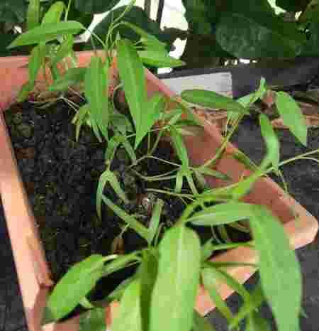 Easy Vegetables to grow at home