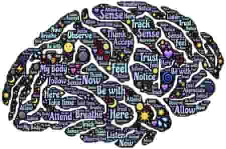 Are male and female brains different