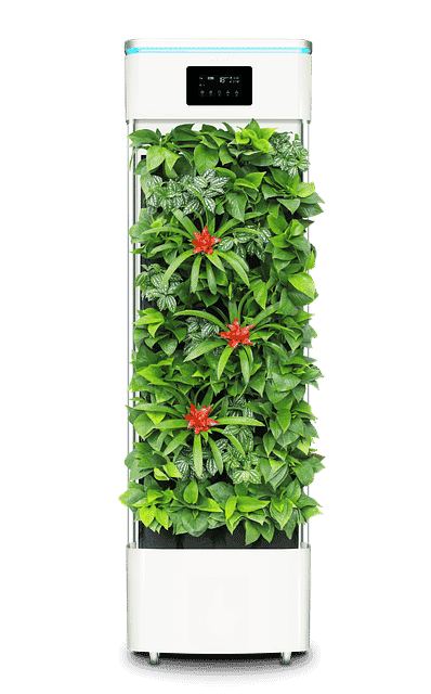 Purify Your Home Using Nature's Way