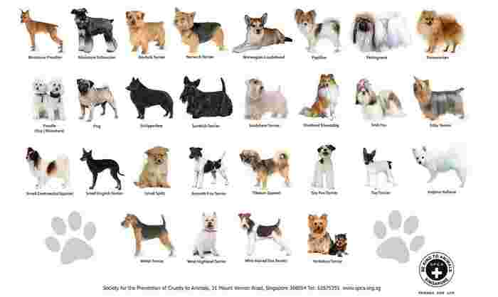 dogs approved 1.jpg