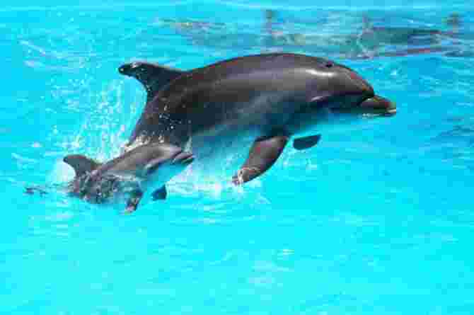 dolphin assisted birth