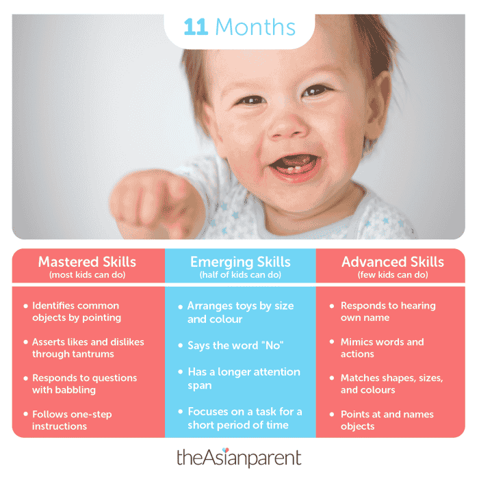Baby development and milestones: your 11 month old