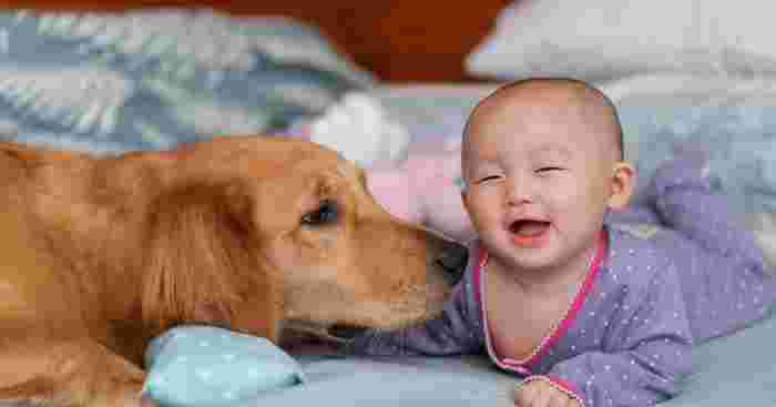 Parasitic Eye Infection in Child Highlights Need for Hygiene When Playing With Pets