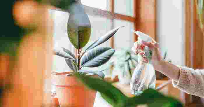 Mother Warns All Parents of the Danger of Dumb Cane to Children