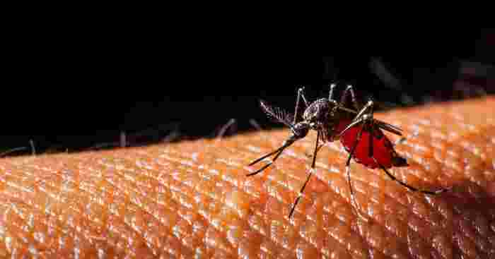 dengue insurance plans to protect yourself