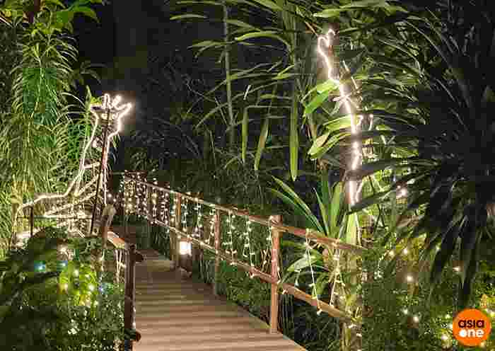 Get Up Close With Creatures Of The Night On Night Safari's New Digital Trail