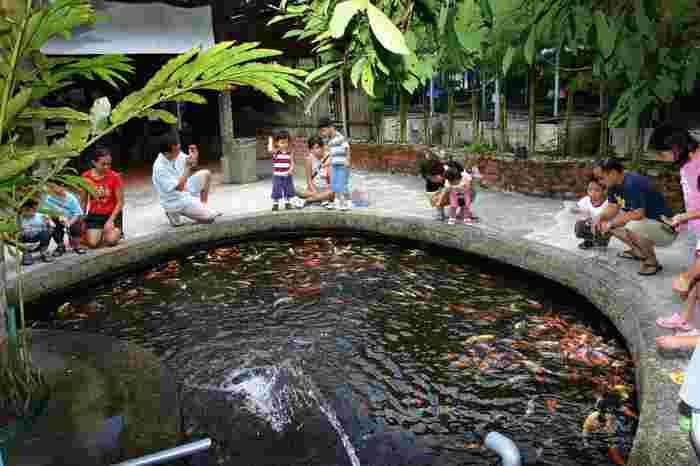 Places In Singapore Where You Can Have Hands-on Animal Experiences That Are Not The Zoo