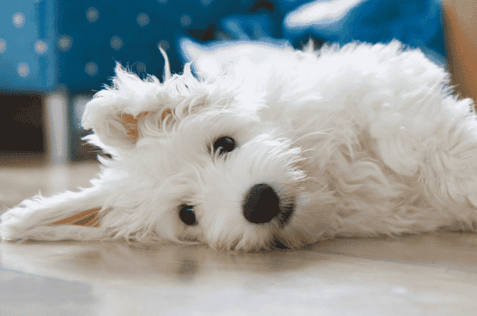 5 HDB-Approved Dogs For Your Lifestyle