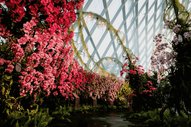 cloud forest in singapore