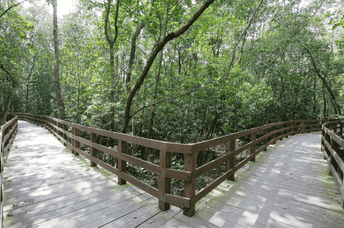 Over 41 DIY Walking Trail Guides In Singapore You Can Enjoy With The Kids