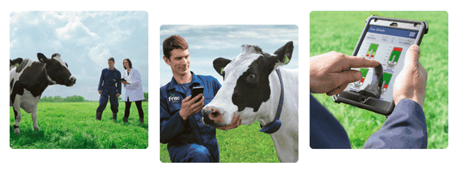 Does Cattle Treatment & Breed Really Matter for Quality Formula Milk?