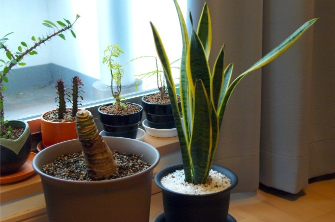 House plants Keep your home smelling nice and fresh with these tips!