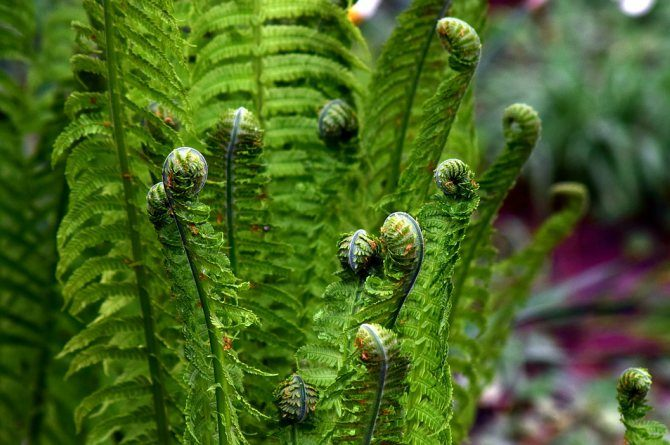 ferns Beautify your home with these houseplants that can also boost your family's health!