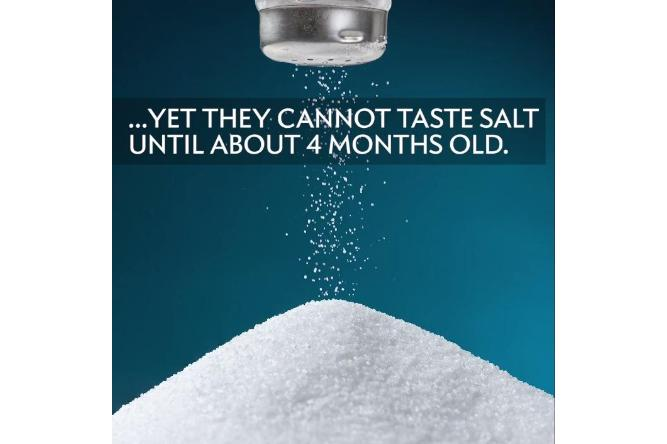 Oddly enough, amniotic fluid is salty