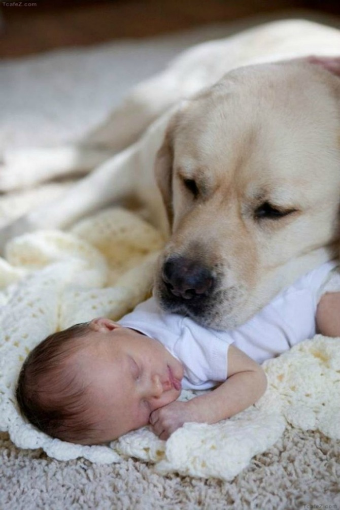 This doggy's looking after this newborn like she's a pup of her own