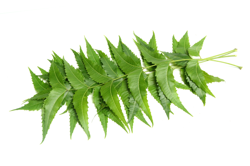 Neem Leaves (Indian Lilac)