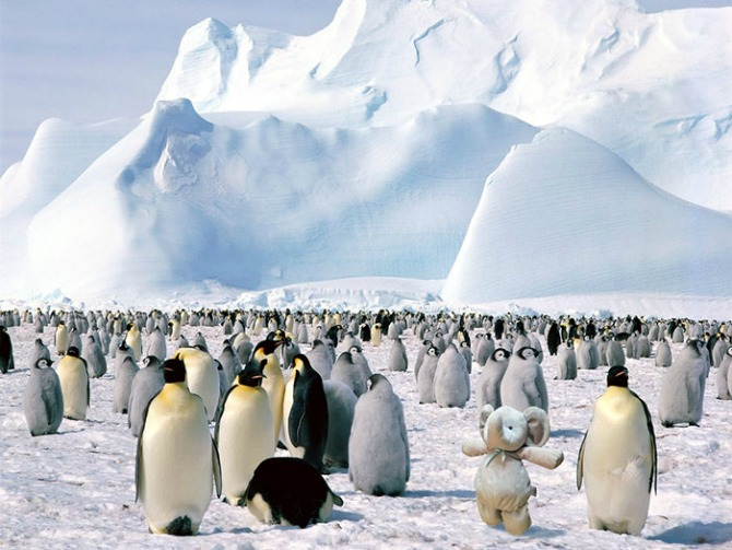 """""""Chilling"""" with penguins"""