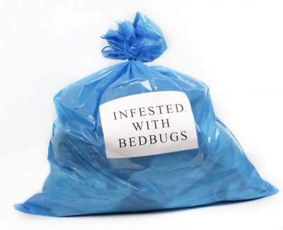 How to prevent a bed-bug infestation