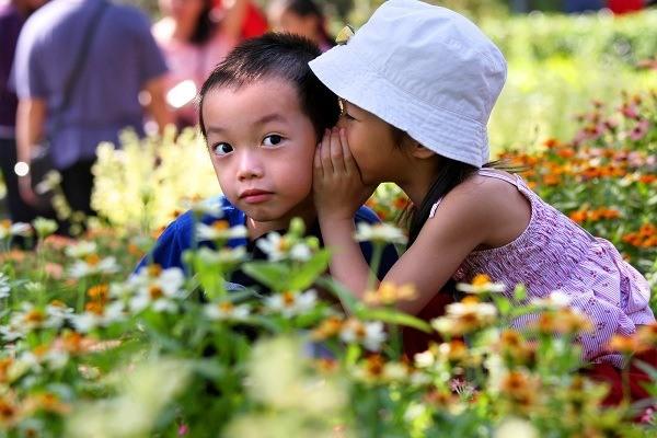 flower, Sentosa, activities, festival