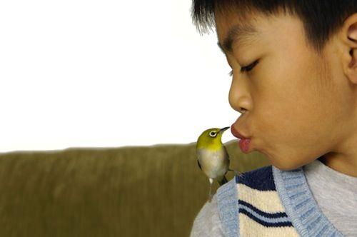 Here are some options to help you decide on the best pet for your child.