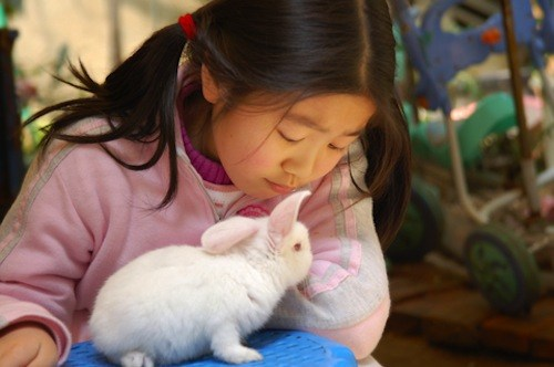 A rabbit may not be the best pet for your child, as it can be quite vicious if provoked.