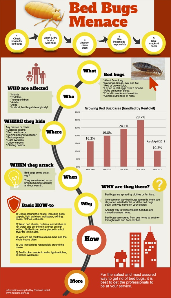 Essential bed bug information
