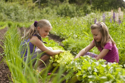 Spending time in the garden is one unique way of disciplining your child.