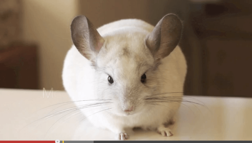 10 worst pets for young kids