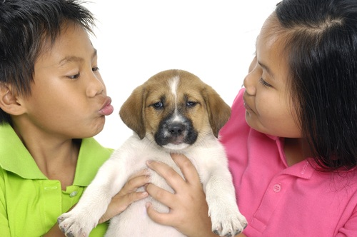 getting a family dog