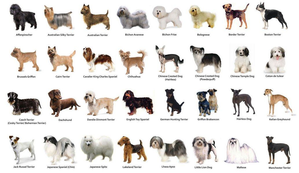 dogs approved 2.jpg