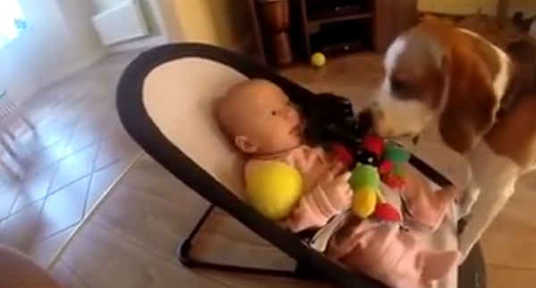Sweet video! Dog comforts baby after 'stealing' her toy