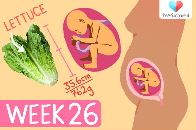 week by week pregnancy guide: week 26