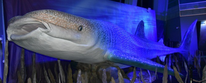 Exhibit of Whale Shark at Monsters of the Sea Here's your chance to meet the Monsters Under the Sea