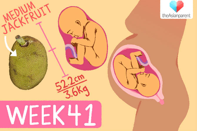 pChart week41 78 Pregnancy Week 41: Guide for Asian Mothers