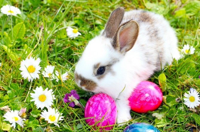Easter Bunny, childhood myths, rabbit, eggs
