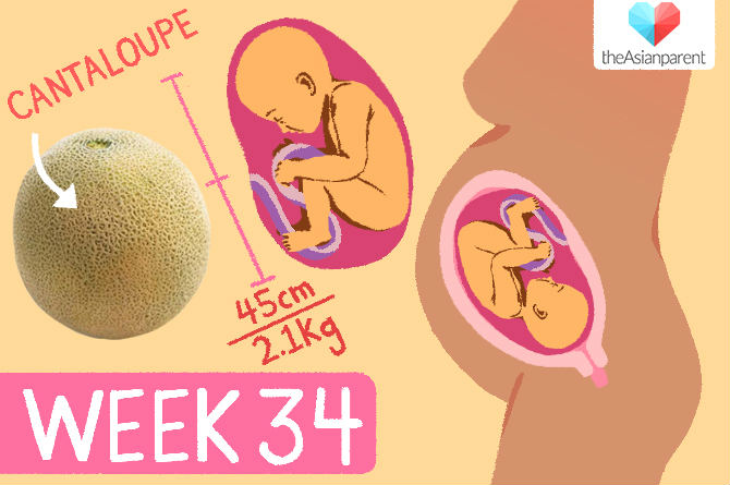 week by week pregnancy guide: week 34