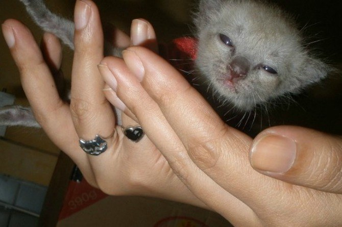 pets, cat, kitten, how to be a loving mother, mum, parenting